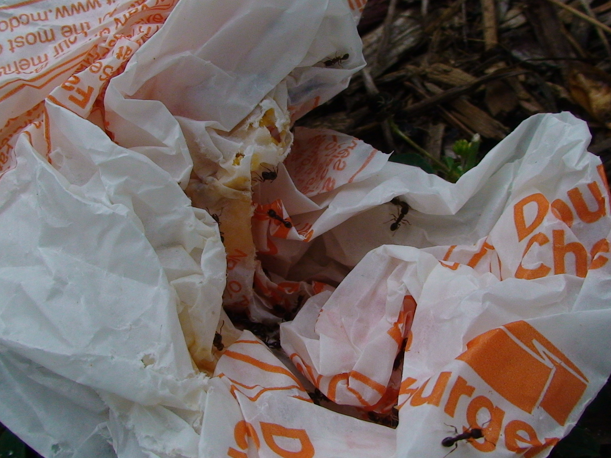 Wax hamburger wrapper, with ants