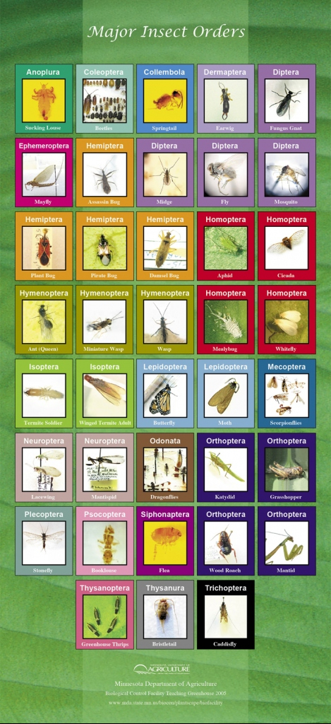 insect orders poster